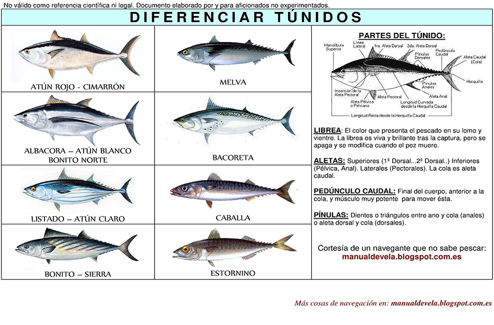 DiferenciarTunidos1 img