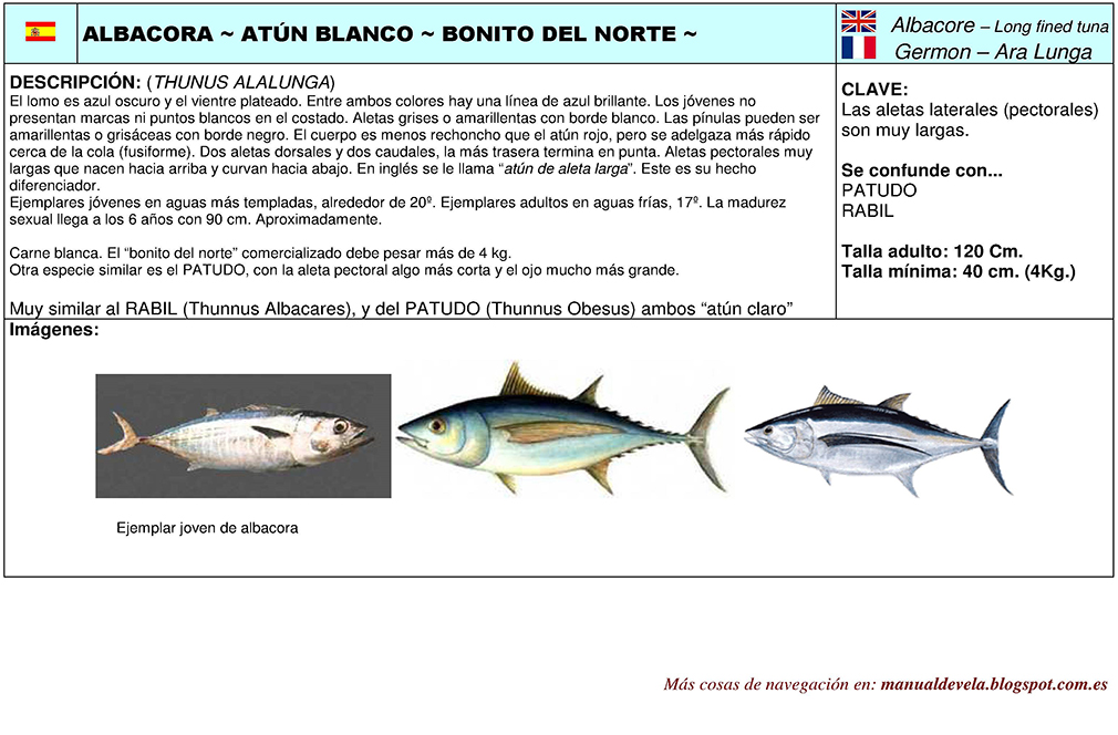 DiferenciarTunidos3 img