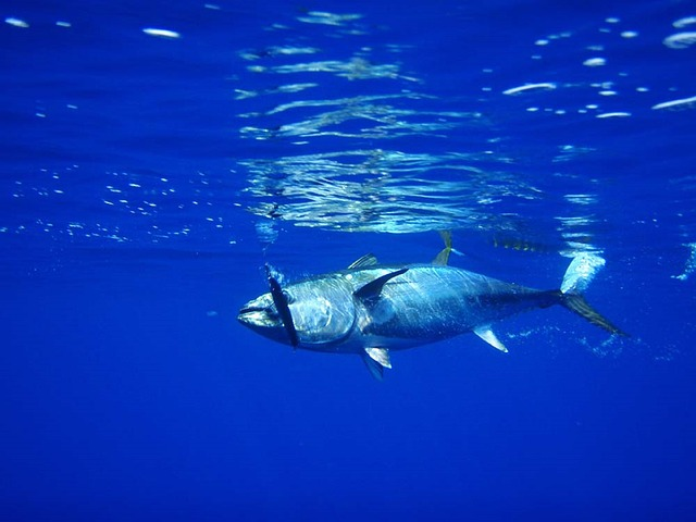 pescadoazul img