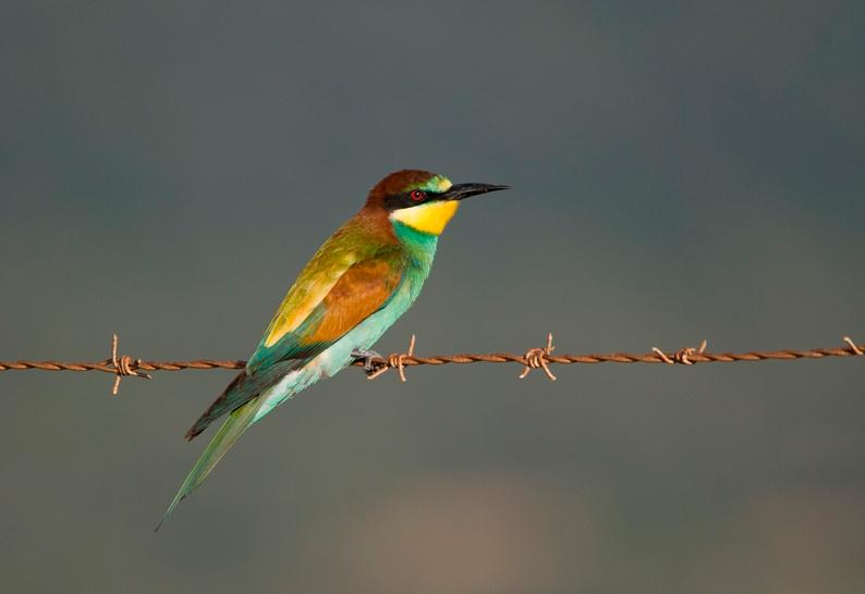 bienvenidas_aves_estrecho_
