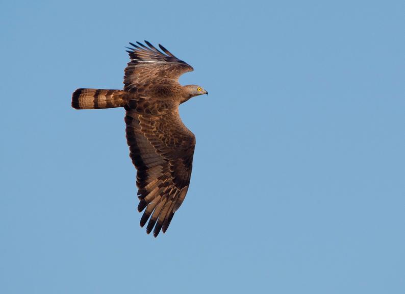 bienvenidas aves Estrecho de Gibraltar