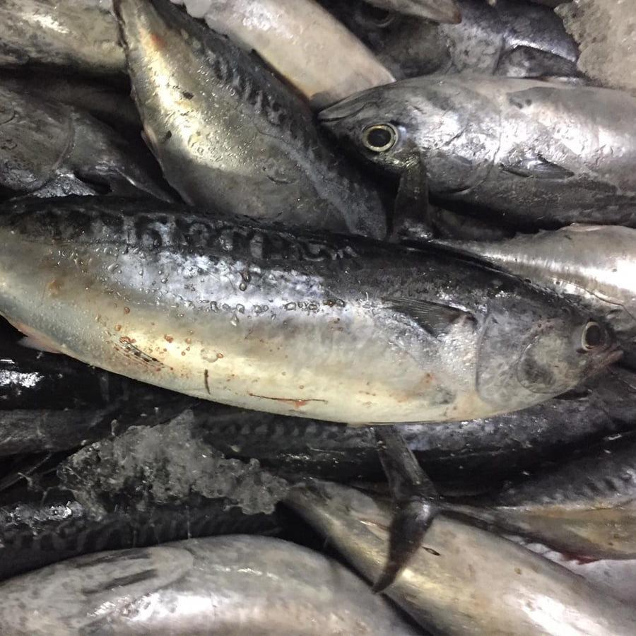 Caballa muere a manos de panga en las pescaderías