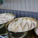 conservas de pescado_Conservera de Tarifa