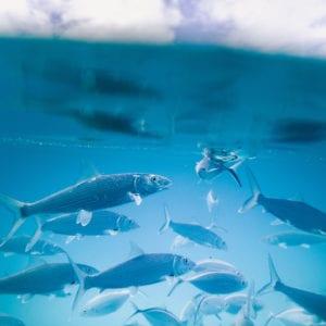 pesca sostenible_consejos para conservar los océanos