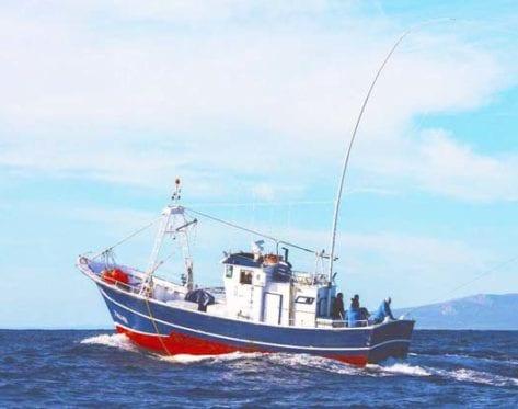 green stick pesca sostenible