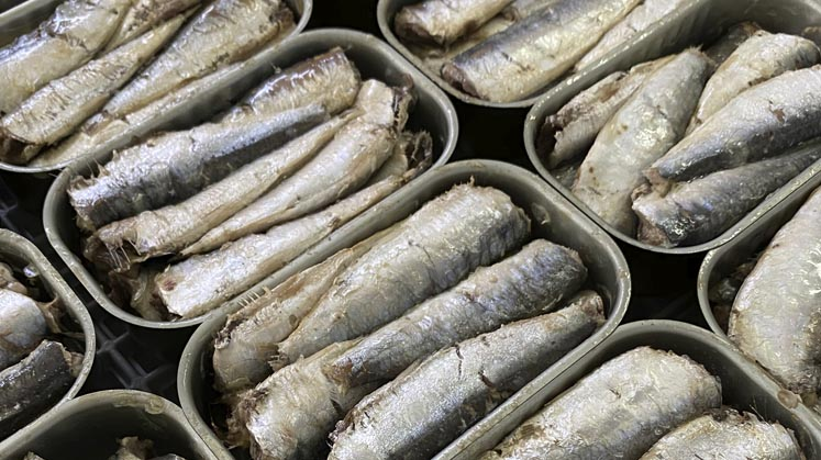 sardinas propiedades nutricionales